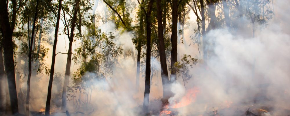 Cape Town Fires – How You Can Help